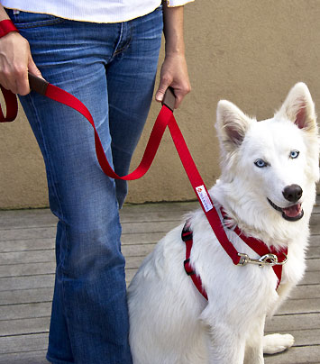 Dog Harness for Walking System for easy leash training your dog