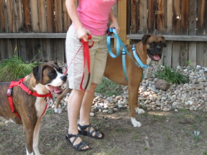 Dog Harness testimonial for Walk in Sync
