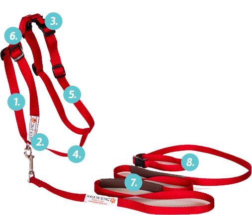 Walk In Sync Harness